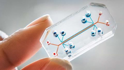 Immune System's health can be determined from Blood Sample thanks to a new microfluidic chip